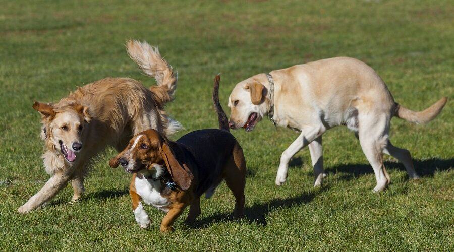 Best Dog Parks in Delaware
