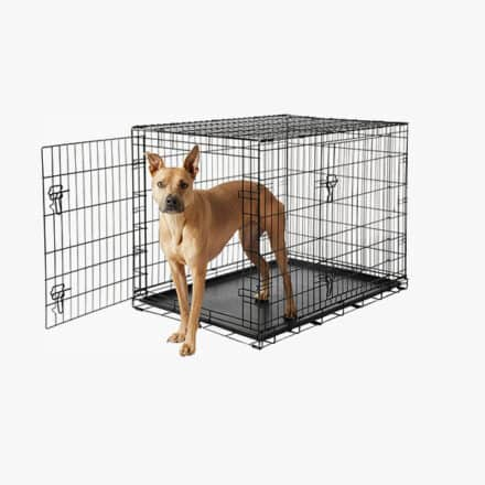 Frisco Fold and Carry Dog Crate With Dog