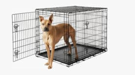Frisco Fold and Carry Dog Crate With Pup