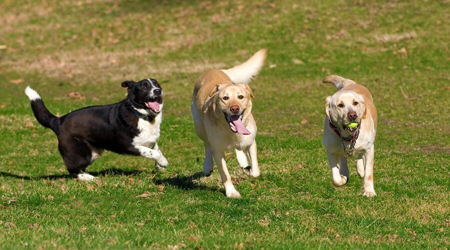 Best Dog Parks in Arkansas