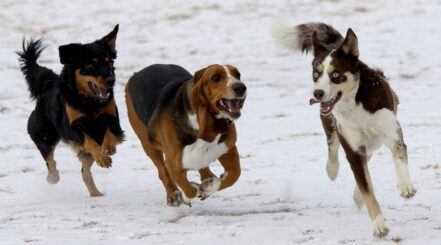 Best Dog Parks in Colorado