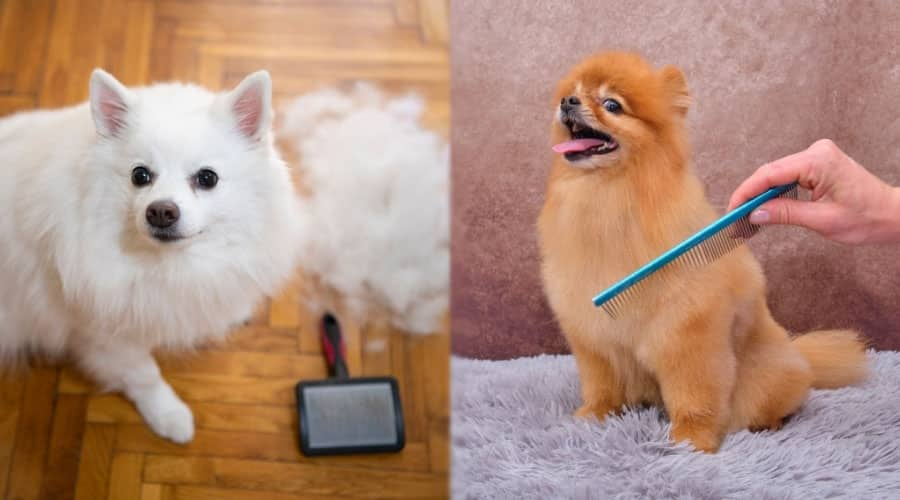Furry Dogs Being Brushed