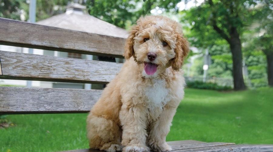 Cute Fluffy Dog Sitting on a Bench