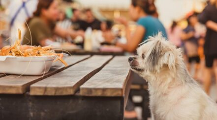 Dog Waiting to Eat Shrimp