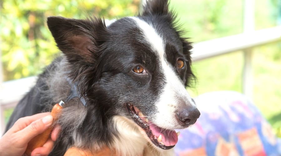 Deshedding Products For Border Collies
