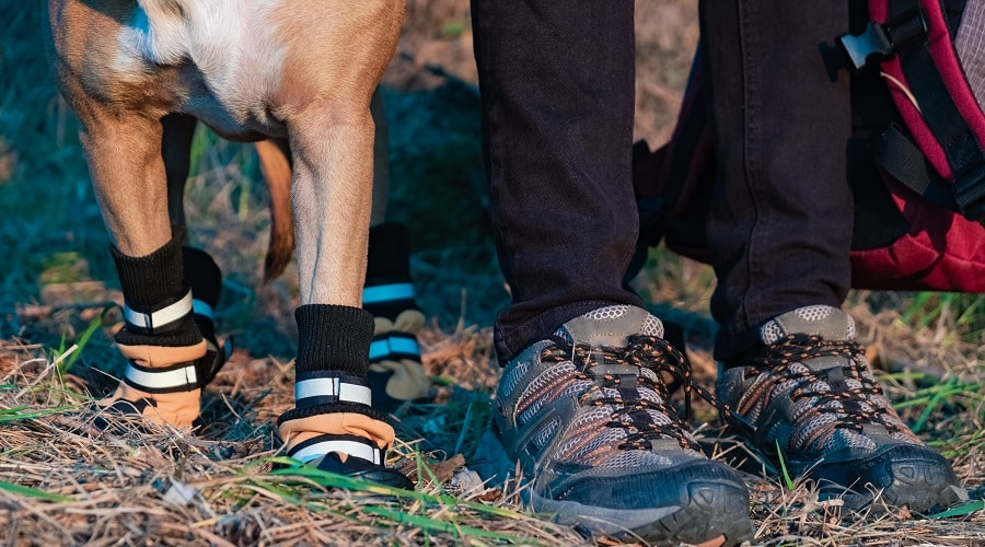 Dog Boot Buyers Guide