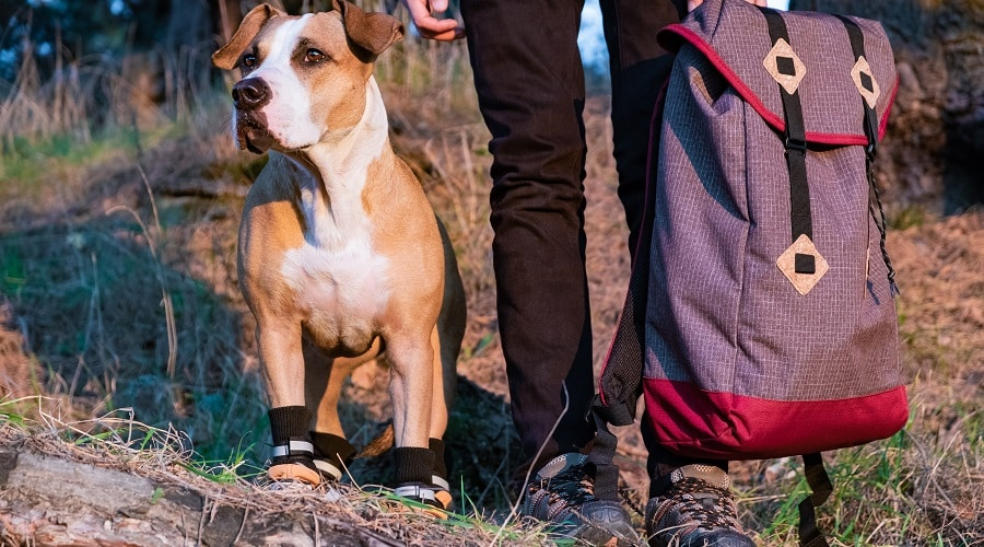 Top Hiking Boots For Dogs