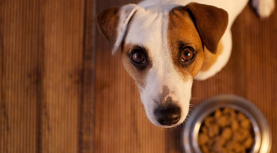 Dog Eating Gas Preventing Dog Food