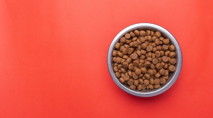 American Journey Dog Food in Bowl