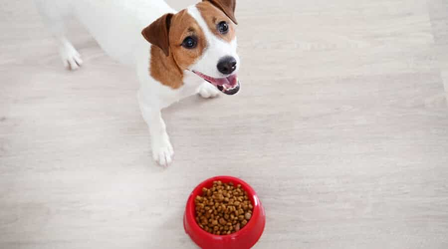 Dog Eating Pea Free Food