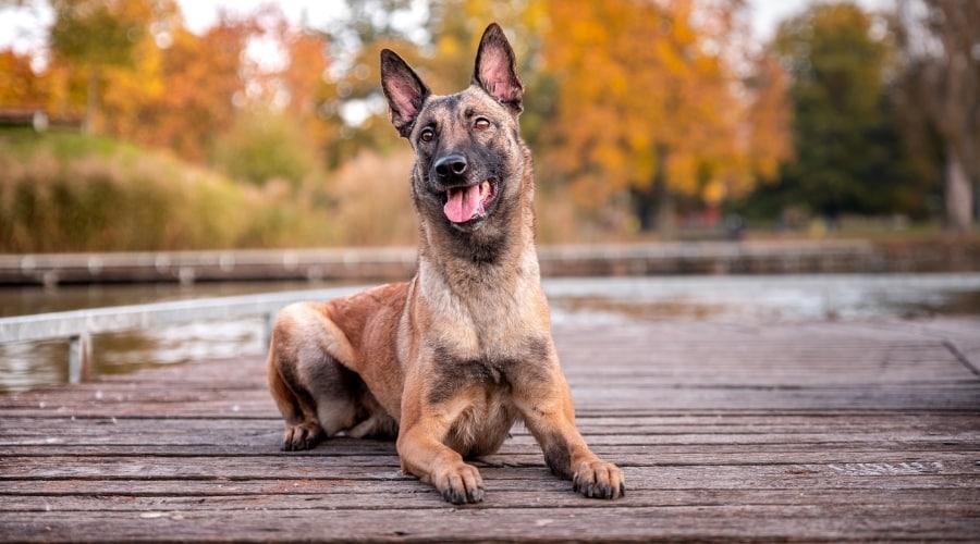 Dog Training on Docks