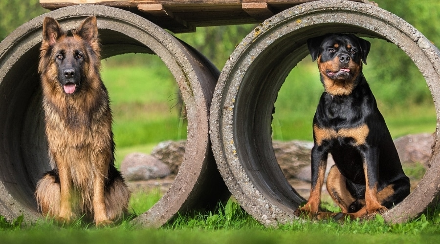 Long-Haired and Short-Haired Dogs Sitting Outdoors