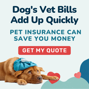 """Sick dog on the ground with text """"Dog's Vet Bills Ad Up Quickly - pet insurance can save you money"""" and """"get my quote"""" button"""